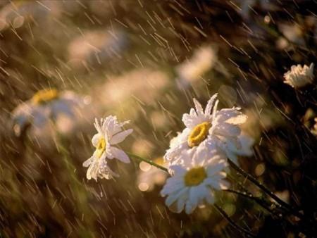 صور باقات ورد وزهور ملونة (1)