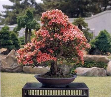 صور باقات ورد وزهور ملونة (2)