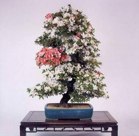 صور باقات ورد وزهور ملونة (4)