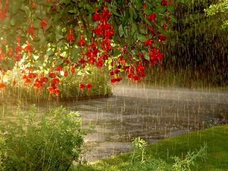 صور باقات ورد وزهور ملونة (5)
