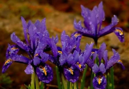 صور باقات ورد وزهور ملونة (6)