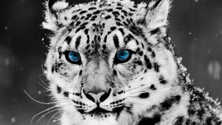 صور حيوانات الغابة (4)
