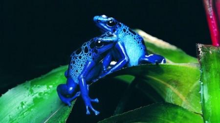 صور حيوانات جميلة جدا (1)
