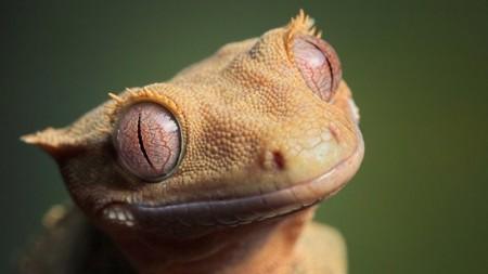 صور حيوانات جميلة جدا (2)