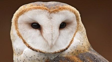 صور حيوانات جميلة جدا (4)