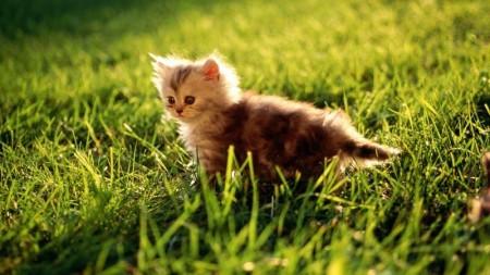صور حيوانات جميلة (2)