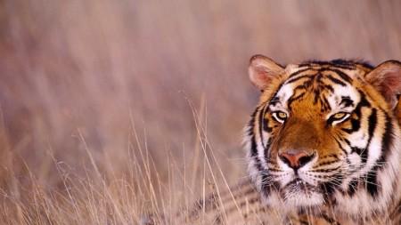صور حيوانات جميلة (4)