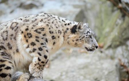 صور حيوانات (3)