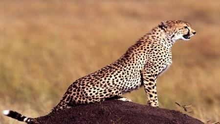 صور حيوانات HD (1)