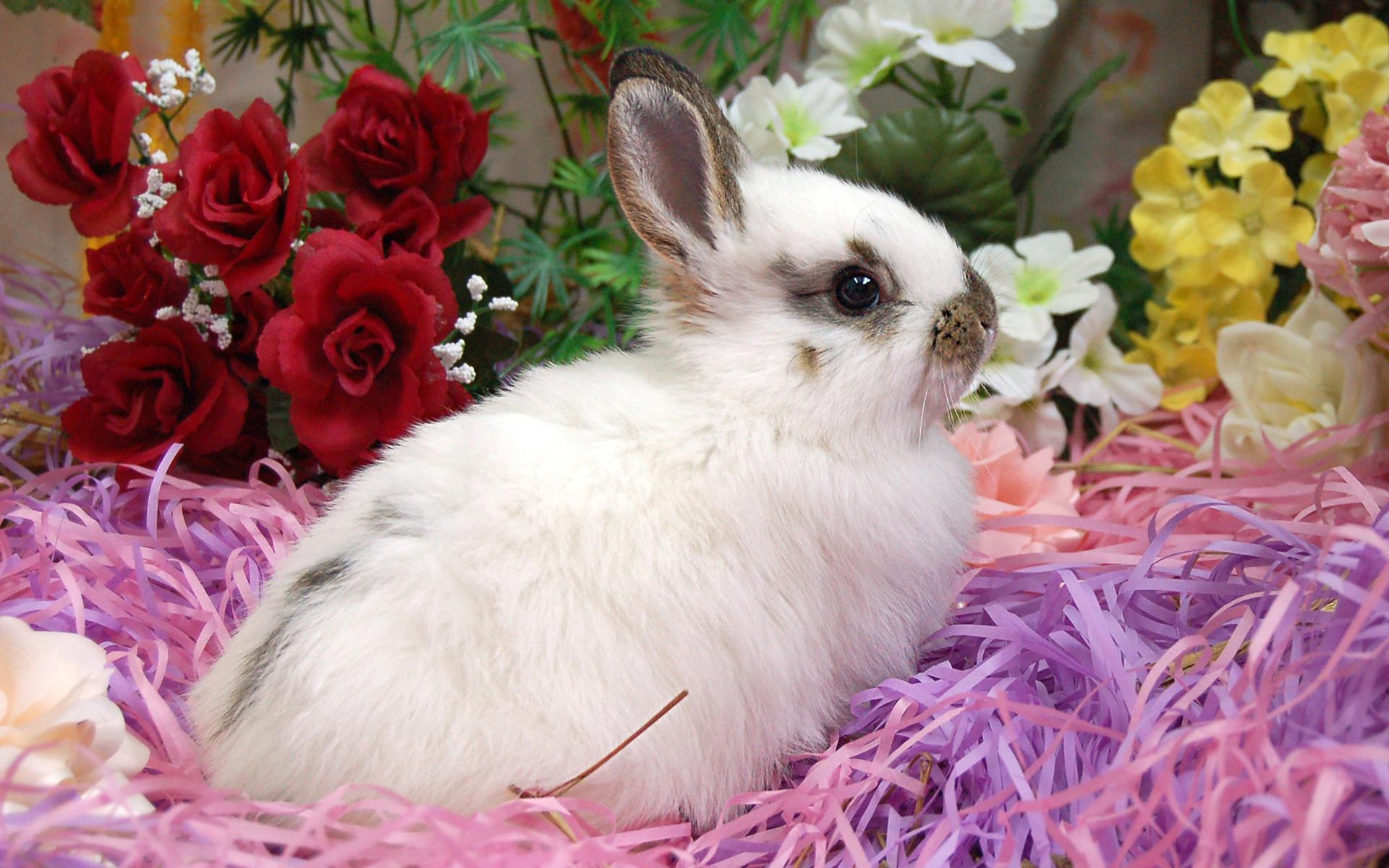 صور خلفيات الأرانب (2)