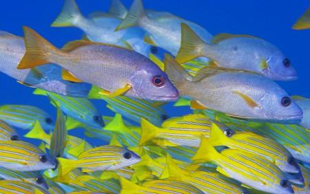 صور سمك زينة hd (3)