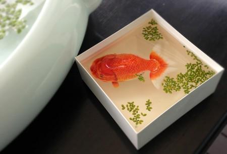 صور سمك (1)
