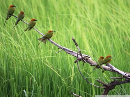 صور طيور جميلة مميزة (1)