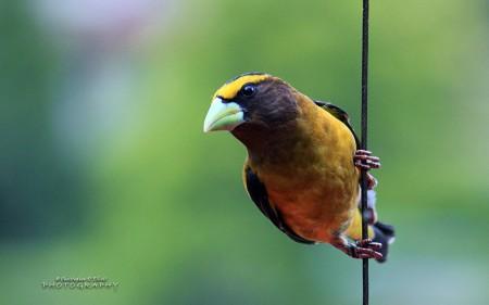 طيور 1