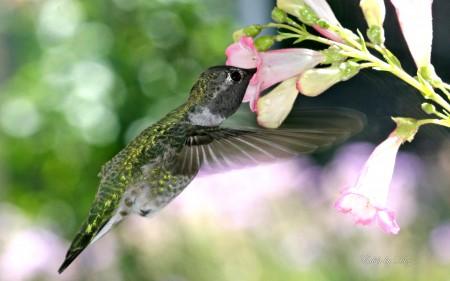 طيور 2