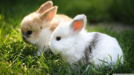 صور عن ارانب (3)