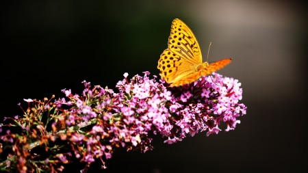 صور فراشات ملونة (3)