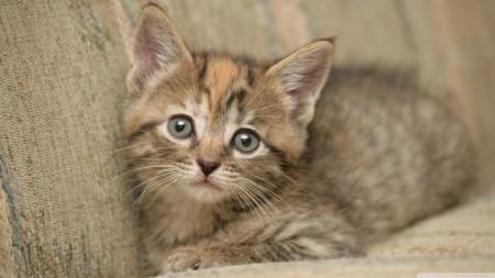 صور قطط جميلة جدا (1)