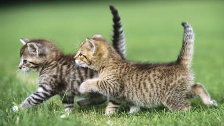 صور قطط جميلة (1)