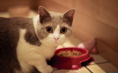 صور قطط جميلة (10)