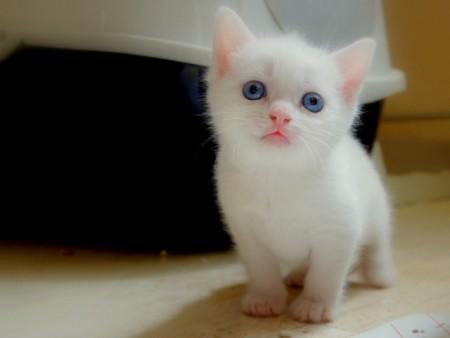 صور قطط جميلة (3)