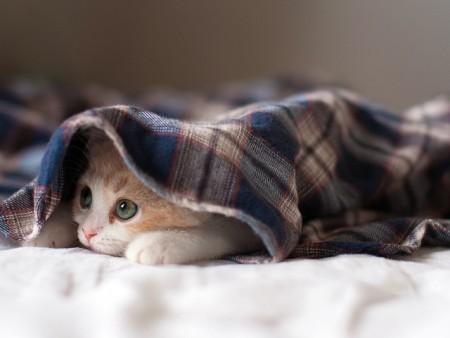 صور قطط جميلة (4)