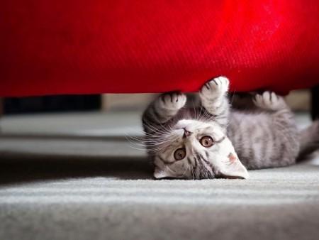 صور قطط جميلة (5)