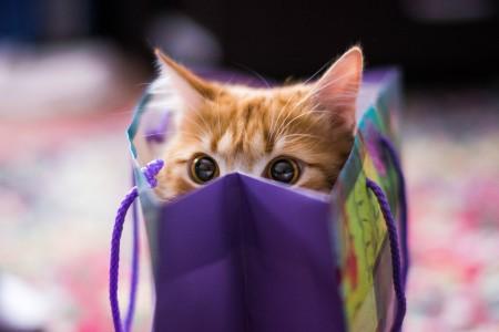 صور قطط جميلة (7)