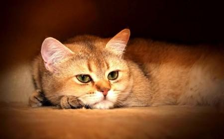 صور قطط حلوة (1)