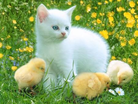 صور قطط حلوة (2)