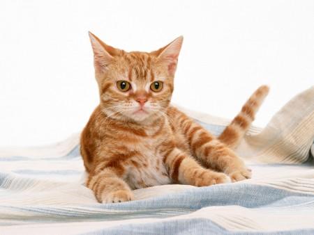 صور قطط حلوة (3)