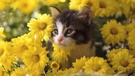 قطط حلوين 3