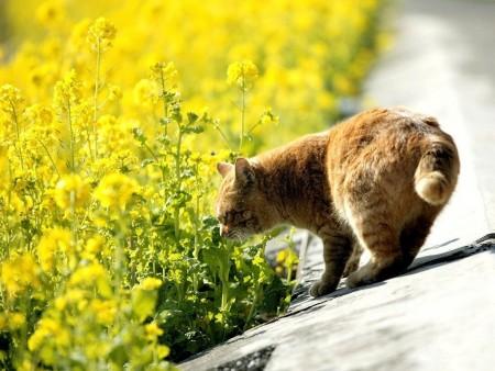 صور قطط شيرازى (3)