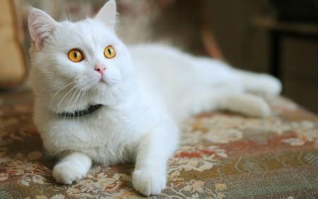صور قطط صغيرة (2)