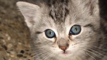 صور قطط صغيرة (6)