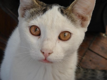 صور قطط صغيرة (8)