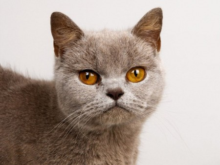 صور قطط كيوت (1)