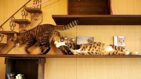 صور قطط كيوت (7)