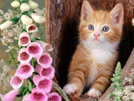 صور قطط (2)