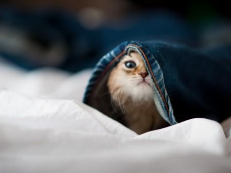 صور قطط (5)