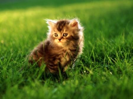 صور قطط (9)