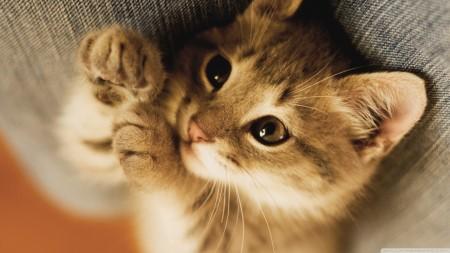 صور قطط HD (2)