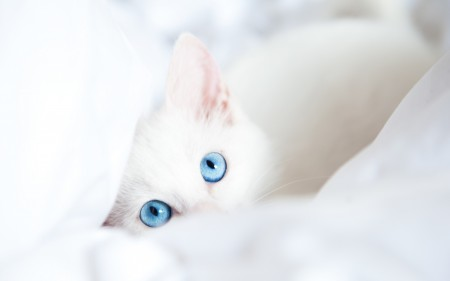 صور قطط HD (6)