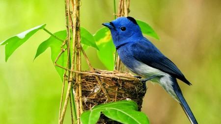 صور وخلفيات الطيور (2)