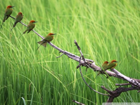 صور وخلفيات الطيور (3)