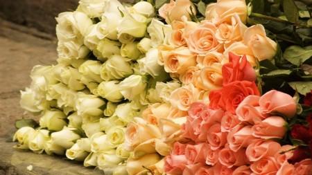 صور ورد جميلة (5)