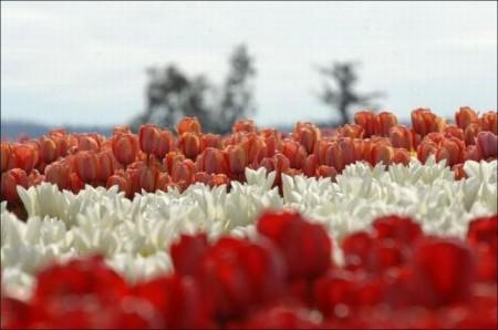 صور ورود جميلة وزهور جذابة (5)