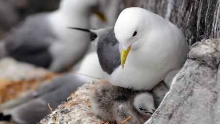 طيور بالصور (10)