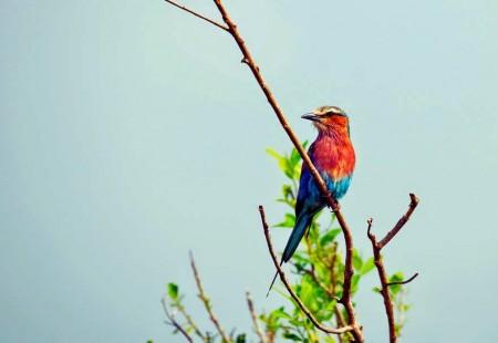 طيور بالصور (11)