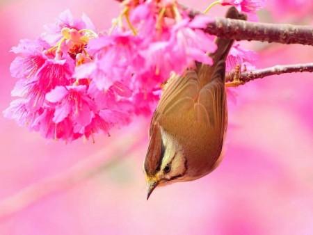 طيور بالصور (12)